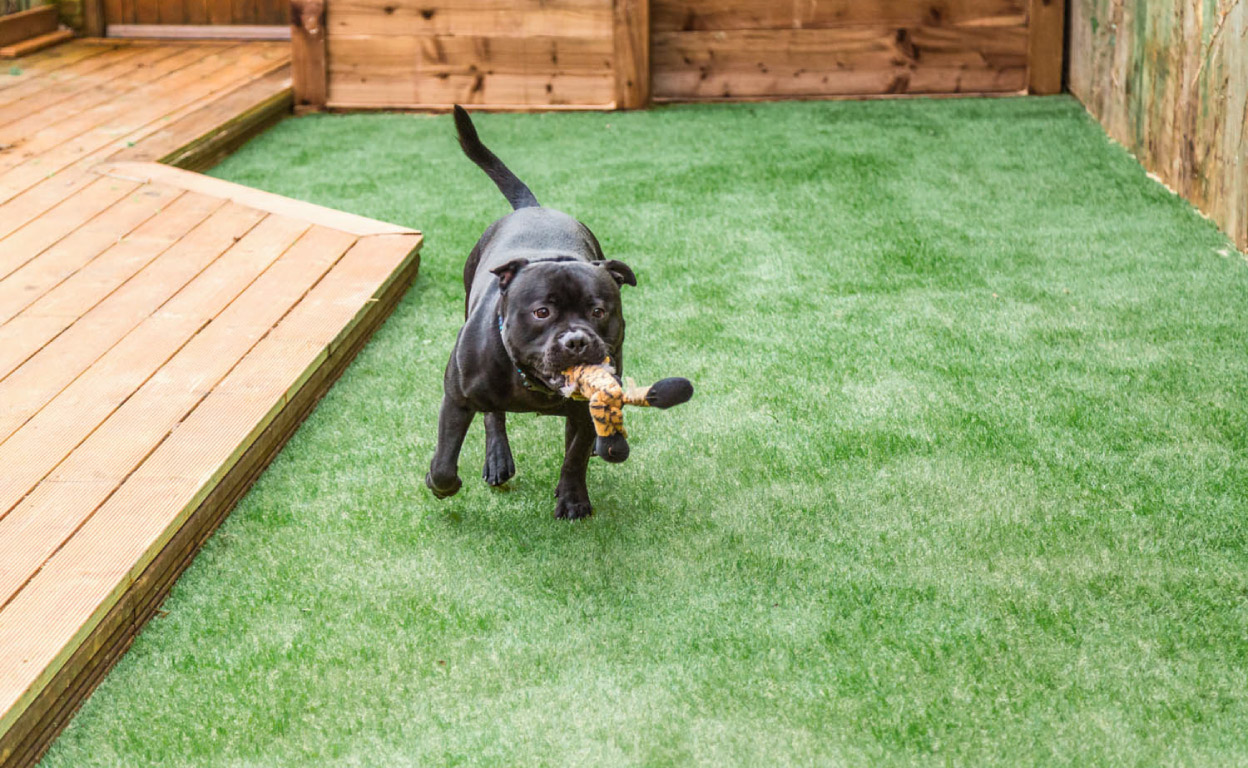 pet friendly artificial grass White Rock BC Ace Turf